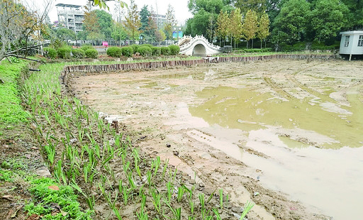 西湖公园水体治理11月底全面竣工