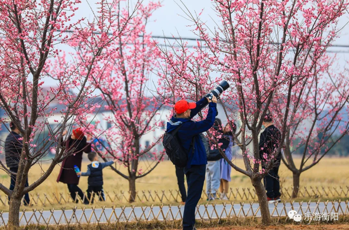 资讯丨衡阳春节假期旅游市场红火,总收入14.7亿元!